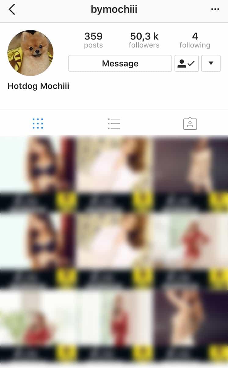 bap zelo dogs instagram hacked kimchislapcom